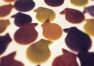 高校の修学旅行で出会った貝殻たちをモチーフに…